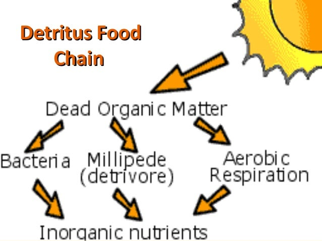 food chains food web ecological pyramids Food chains crossword: this food chain crossword focuses on food chains, trophic levels and ecological pyramidsthis 28 question editable crossword with answer key provides a fun way to review the main terms and concepts learned in this topic.