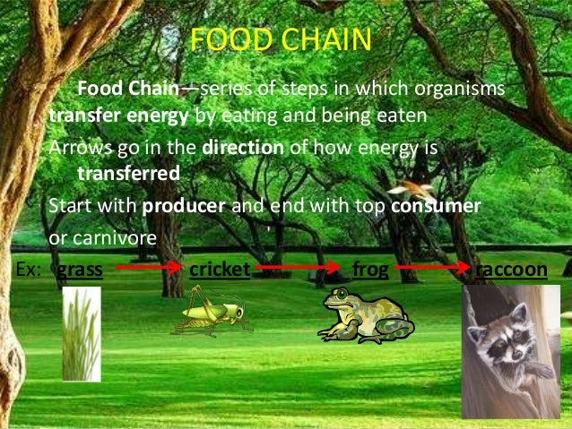 Food Chainfood Web Forest Ecosystem