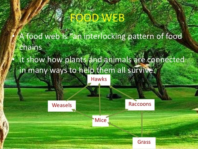 Food chain,food web, forest ecosystem
