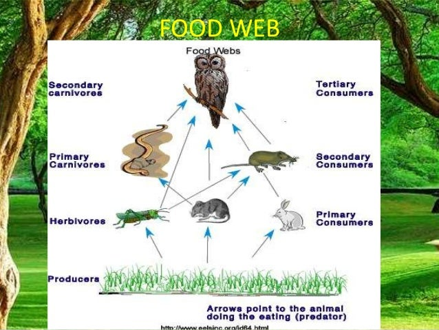 Food Web In A Food Chain