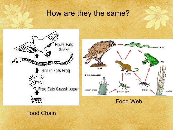 biology food web Food web project description goal: create a food web based on a chosen ecosystem, with at least 3 food chains that interlock materials: netbooks, research books and articles, project materials, science.