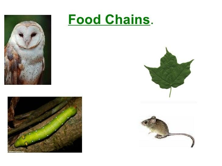 Food Chains .