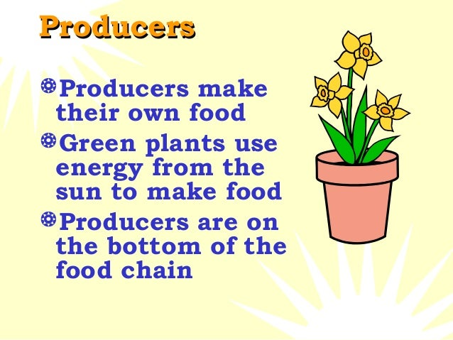 where are producers in the food chain