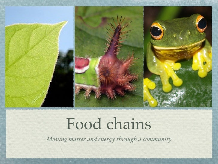 Food chainsMoving matter and energy through a community