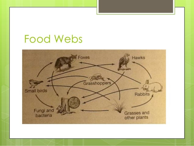 essay on food chains and webs Get an answer for 'what is the difference between a food chain and a food web' and find homework help for other science questions at enotes.