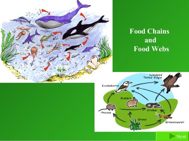 Food Chains    and Food Webs              Next