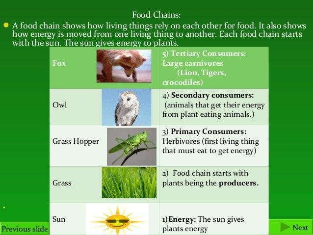 food chains i