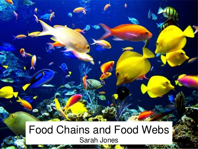 Food Chains and Food Webs  Sarah Jones