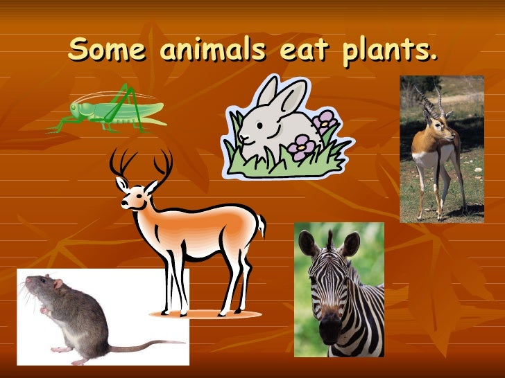 In Food Chains These Organisms Eat The Food Producers