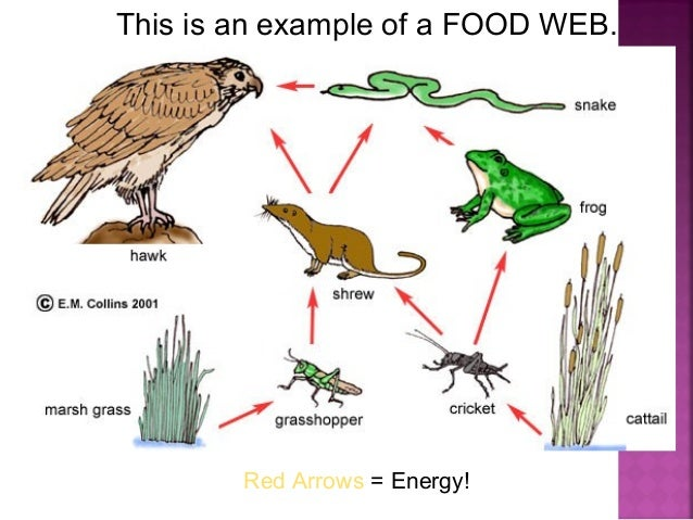 Food chain the desert biome.