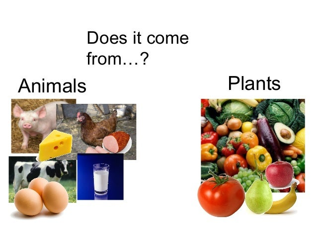 Where Does The Food We Eat Come From