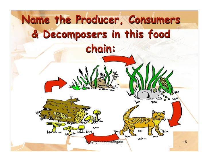 Similiar Desert Food Web Producers Consumers And Scavengers Keywords