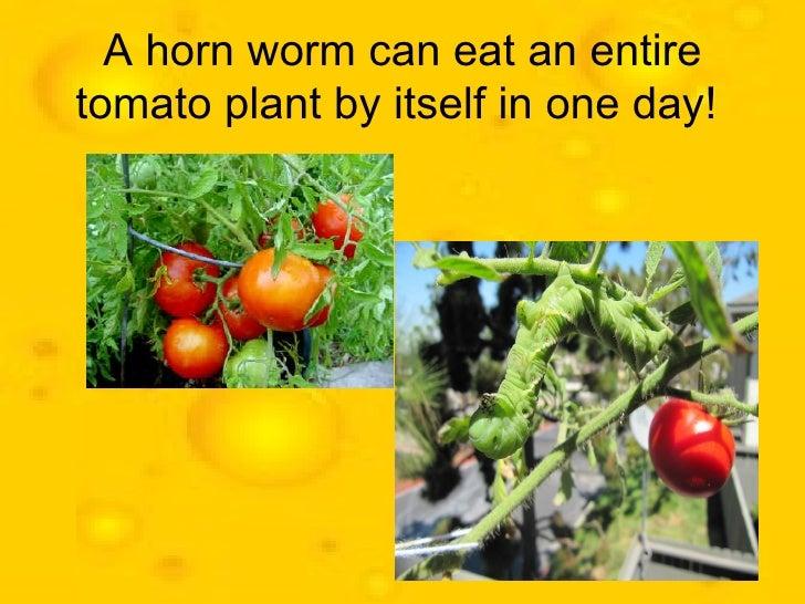 Food facts Slide 2