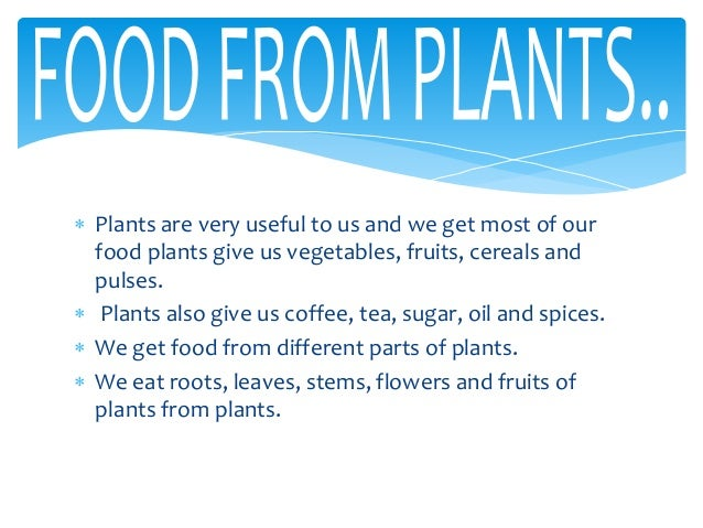 How Plants Are Useful To Us Gorgeous Food From Plants Decorating Design
