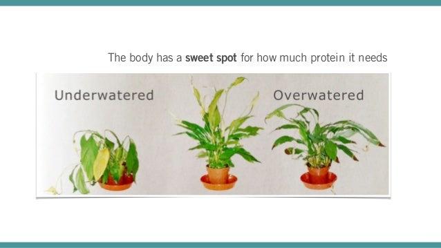 PALEO Looks to evolution for understanding PLANT Looks to science for understanding