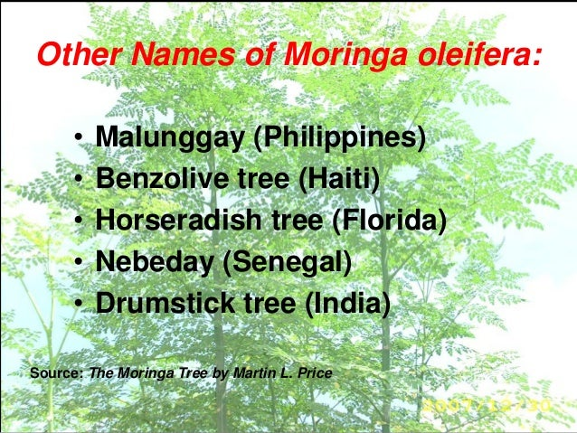Developing Products from Moringa