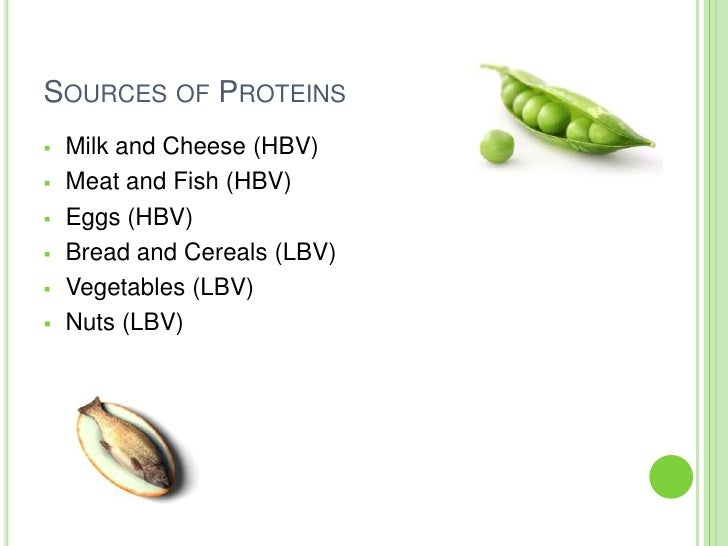 food technology proteins