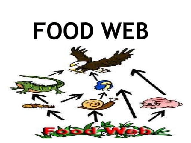 Food web (1) 2