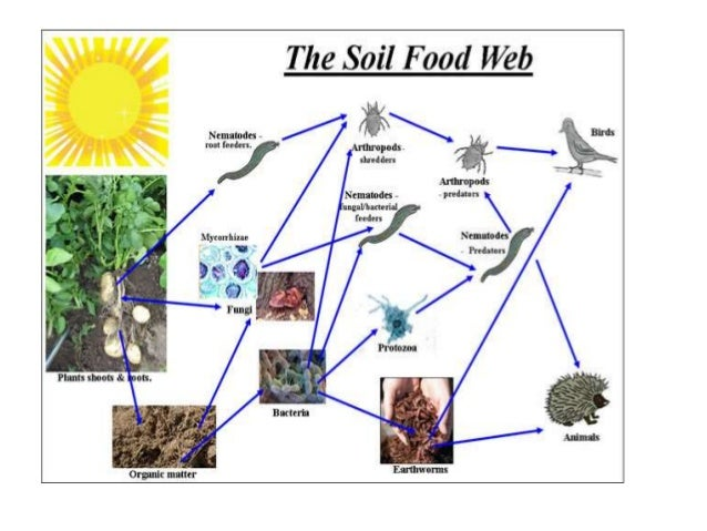 terrestrial food web diagram