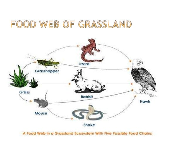 Land Animal Food Chain