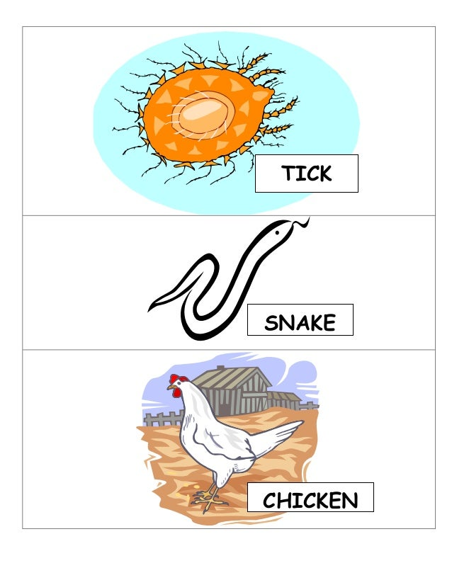 Food Web And Food Chain Connection Game
