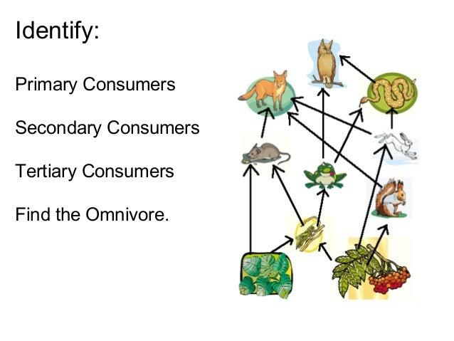 Food web, biosphere etc