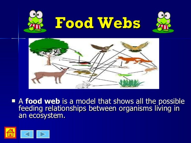 Food Webs And Food Chains Activities Year
