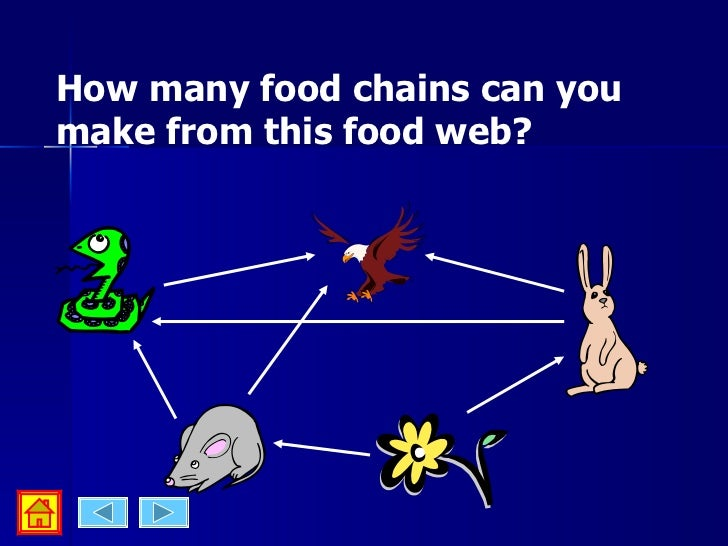 Food webs & food chain