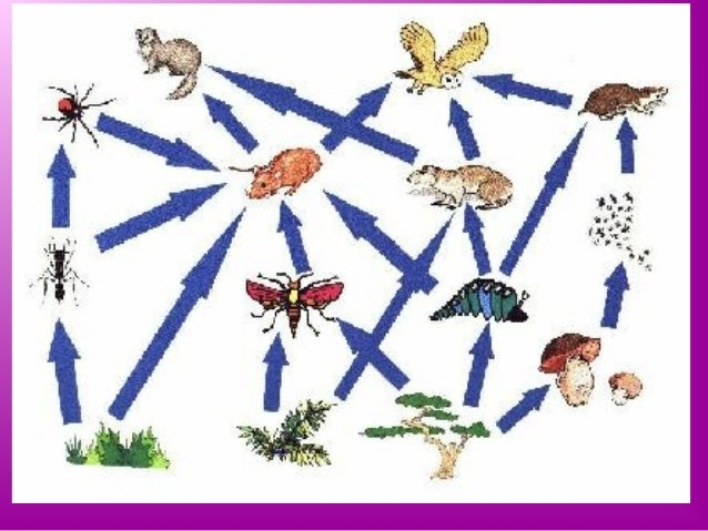 food web assignment