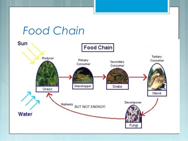 Food Chain With  Trophic Levels