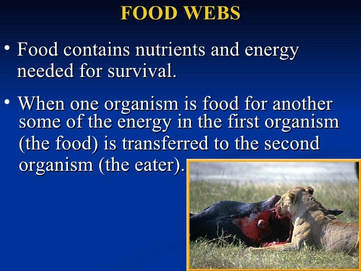 FOOD WEBS <ul><li>Food contains nutrients and energy needed for survival.  </li></ul>some of the energy in the first organ...