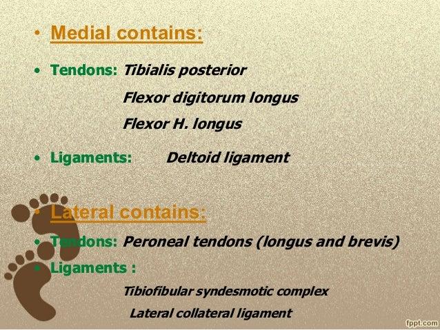 Foot radiological anatomy. shorouk zaki