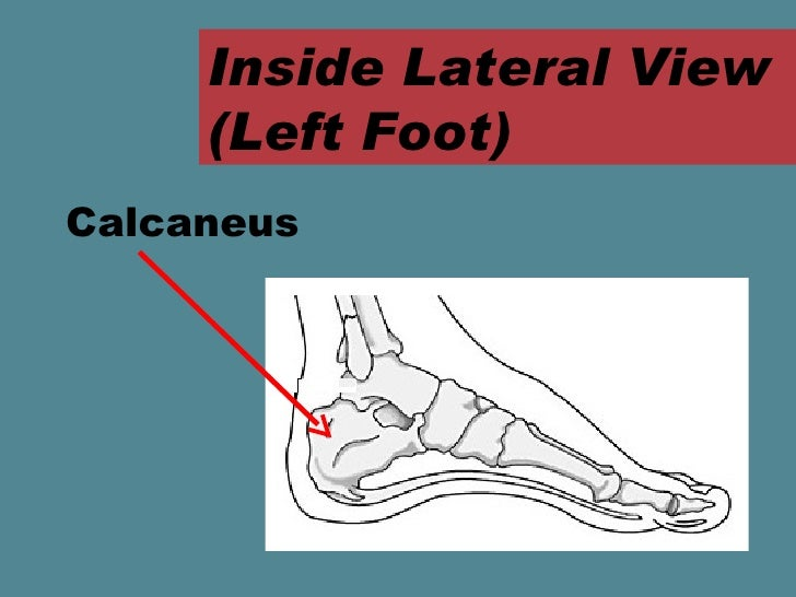 Foot Anatomy Ppt