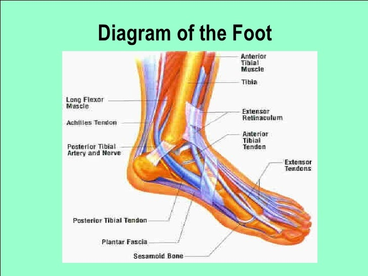 foot presentation, Human Body