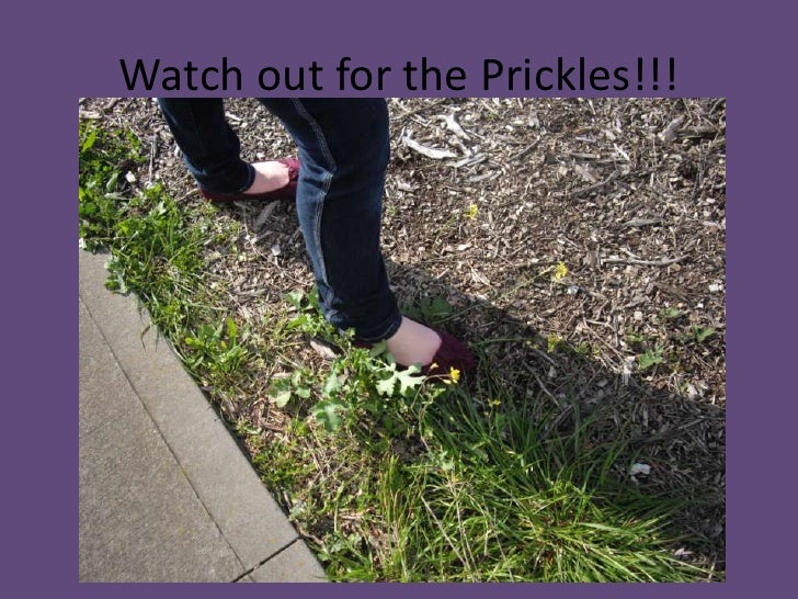 Watch out for the Prickles!!!<br />