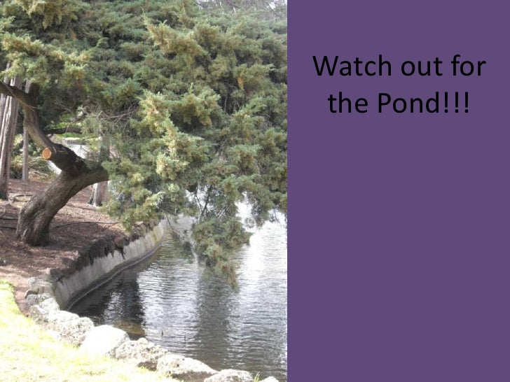 Watch out for the Pond!!!<br />