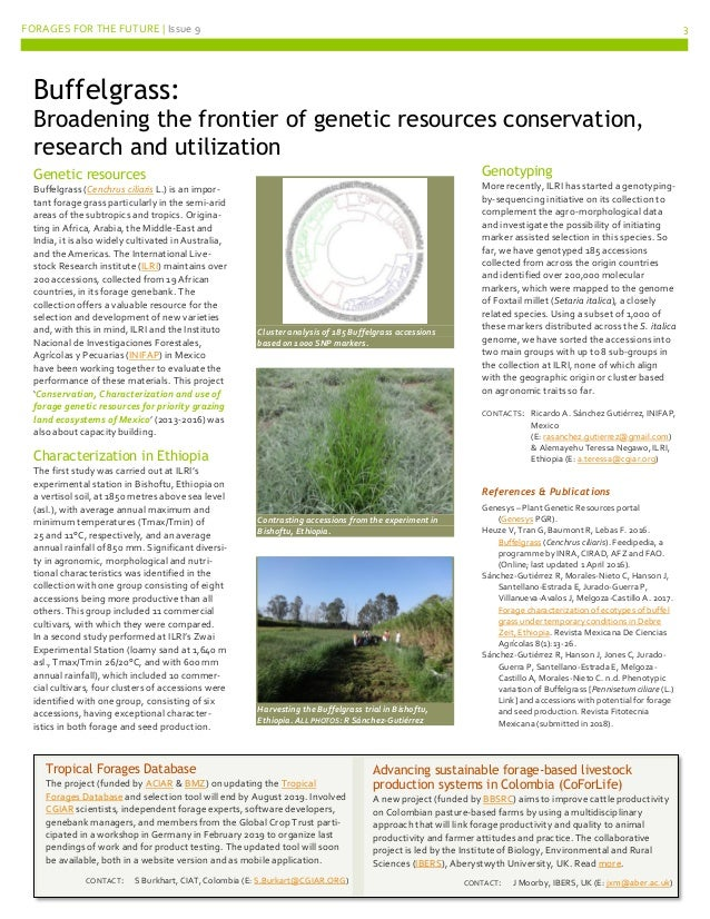 Forages for the Future Newsletter No 9 Slide 3