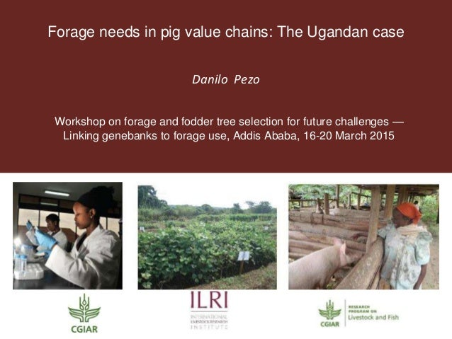Forage needs in pig value chains: The Ugandan case Danilo Pezo Workshop on forage and fodder tree selection for future cha...