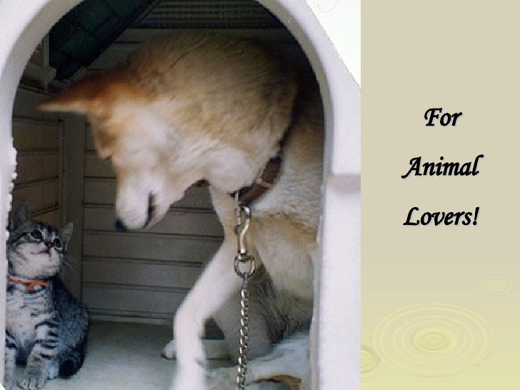 For Animal Lovers!