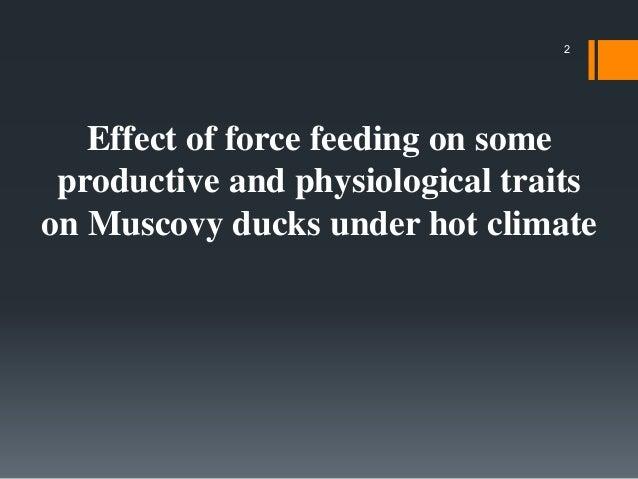 Force feeding Slide 2