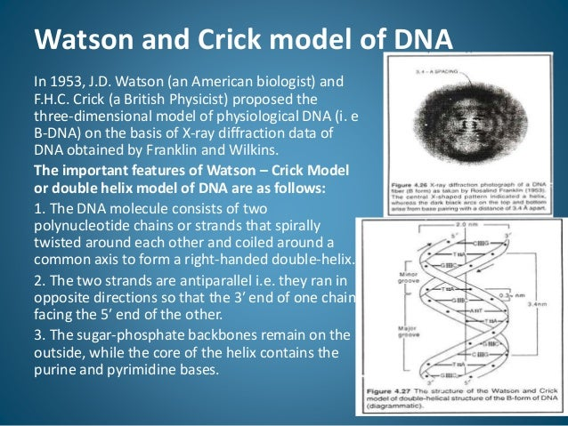 Features of Watson and Crick Model of DNA