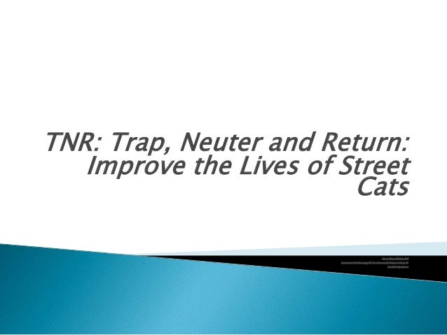TNR: Trap, Neuter and Return: Improve the Lives of Street Cats Sharon Warner Methvin, PhD Department of Anthropology, Mt. ...