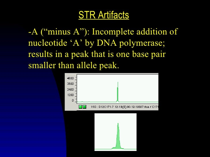 STR ArtifactsStutter: Slippage of DNA polymerase;results in a peak that is four base pairs(one repeat unit) smaller than a...