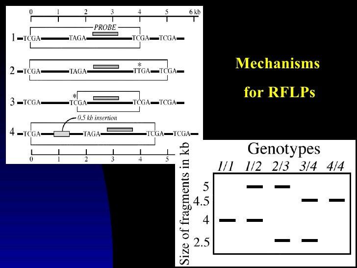 Mechanismsfor RFLPs