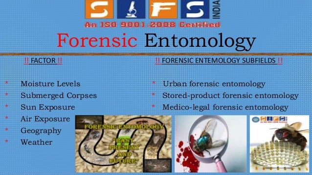 an analysis of forensic entomology the new type of detective A relatively new discipline, forensic botany incorporates if investigators find a rare plant type near a and any barriers to further investigation/analysis.
