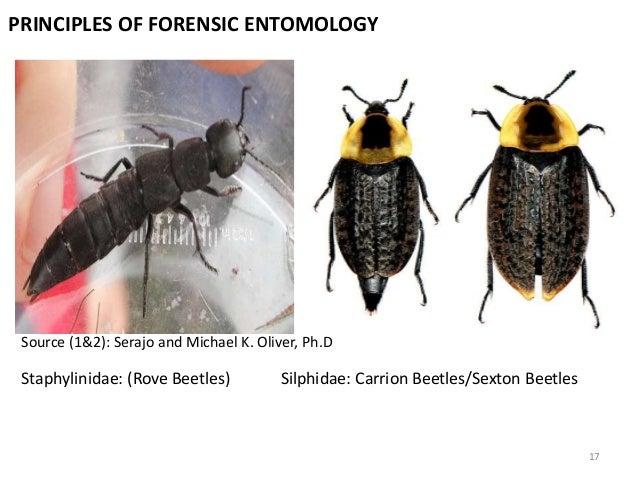 Forensic Entomology Presentation