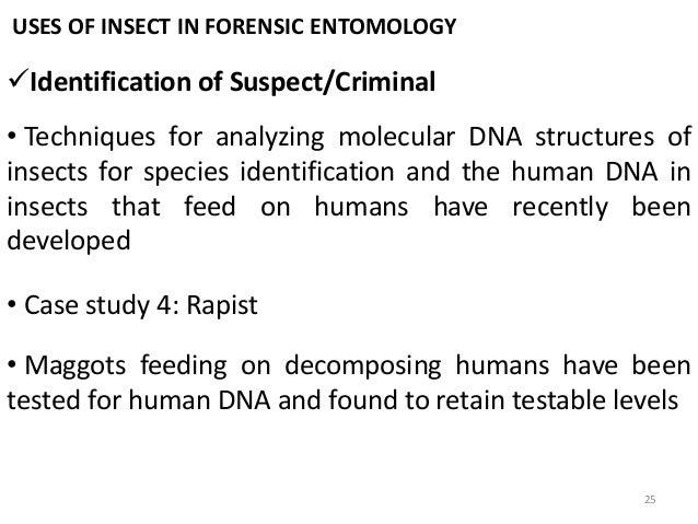 forensic entomology case study