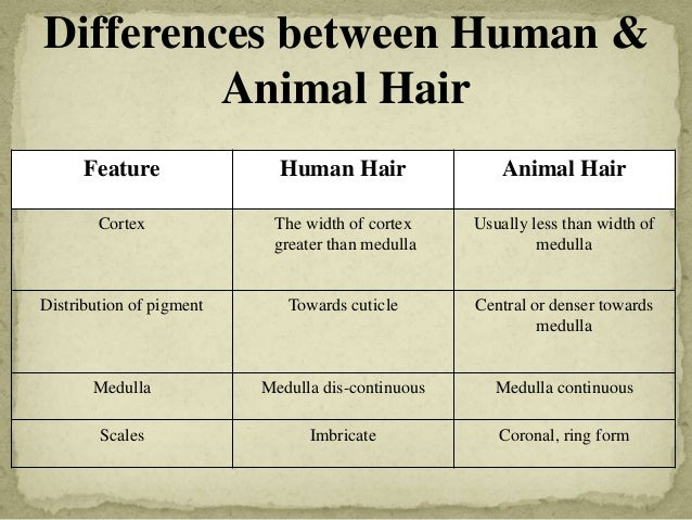 Forensic examination of hair
