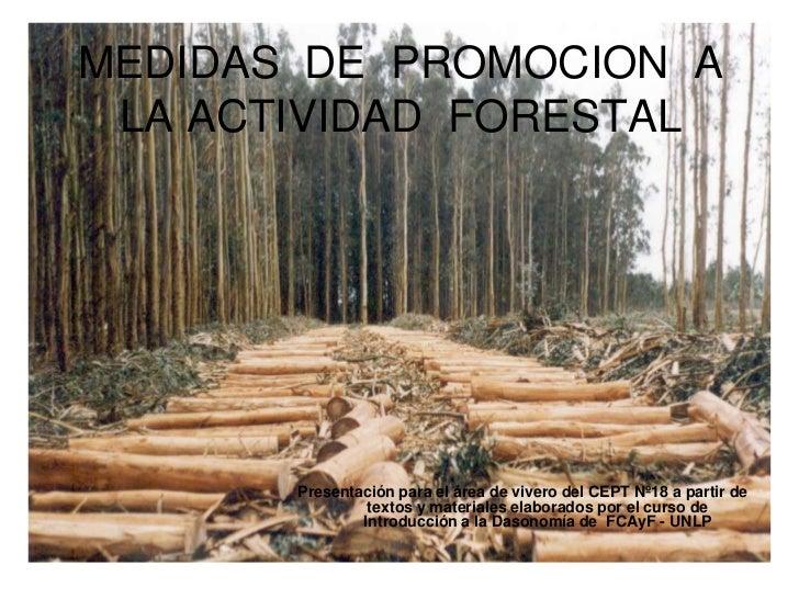 MEDIDAS  DE  PROMOCION  A  LA ACTIVIDAD  FORESTAL<br />Presentación para el área de vivero del CEPT Nº18 a partir de texto...