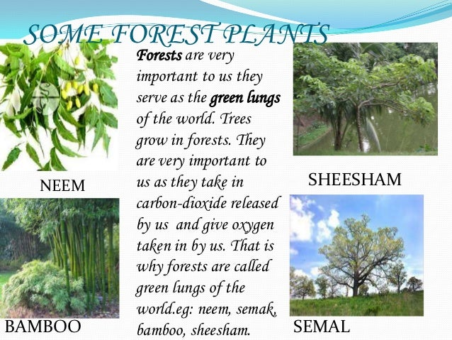 forest our lifeline Poems on forest our lifeline essay, if you do your homework now we _____ to the cinema in the evening, duke creative writing summer camp.